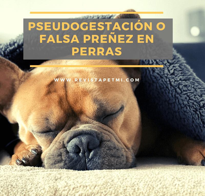 Pseudogestación o falsa preñez en perras, lo debes saber
