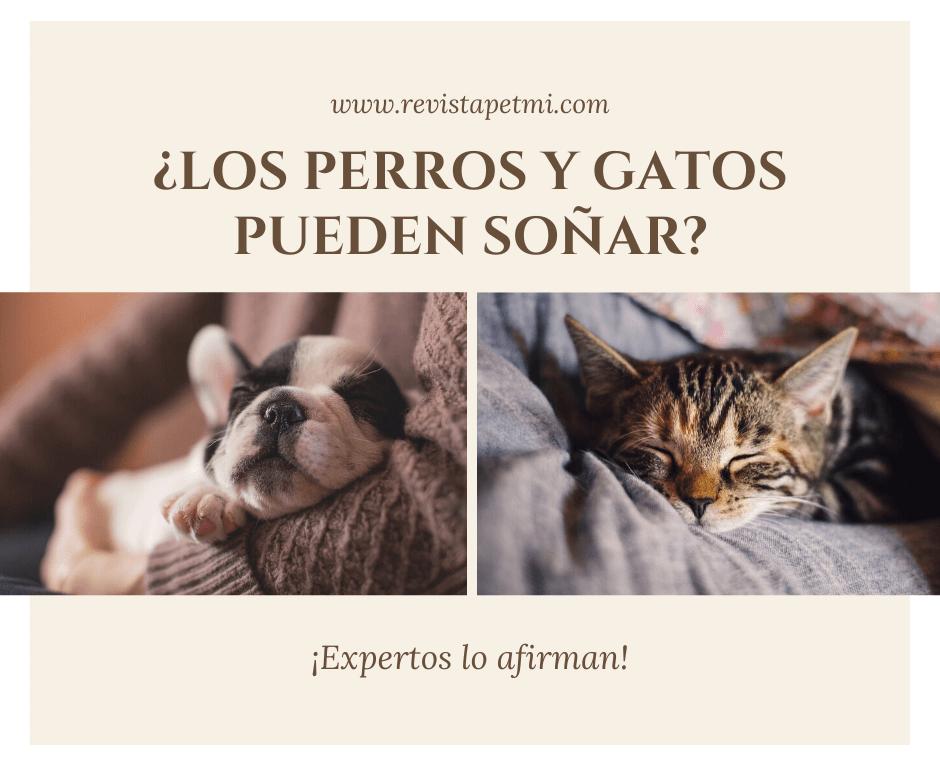 los perros y gatos pueden soñar (2)