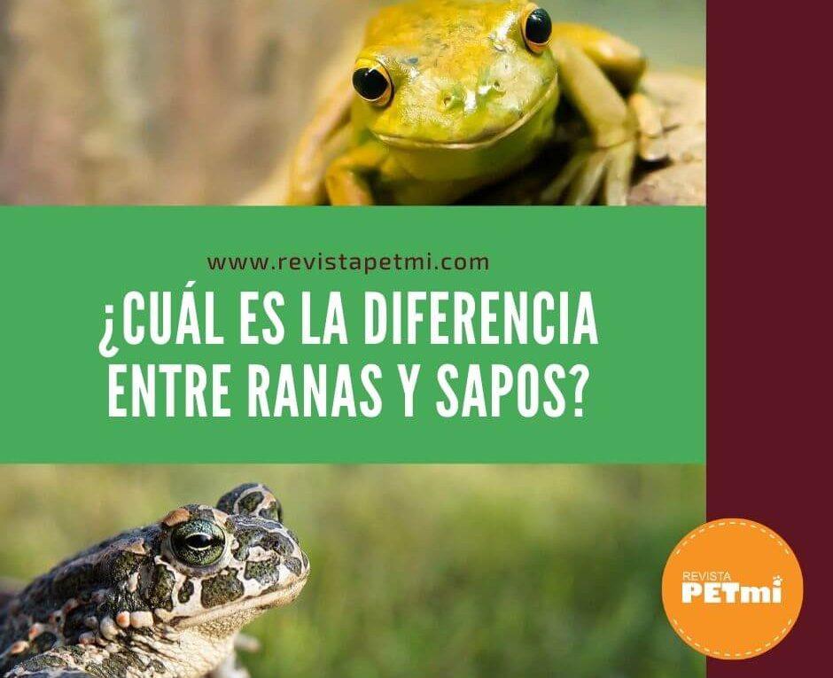 ¿Cuál es la diferencia entre ranas y sapos_ (1)