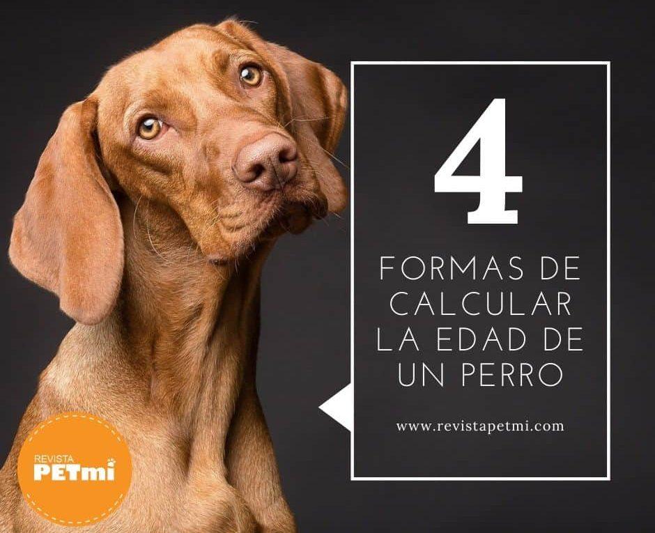edad de un perro (5)-min