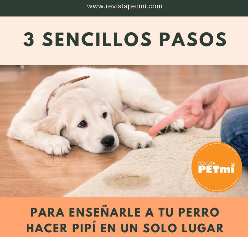3 sencillos pasos para enseñarle a tu perro hacer pipí en un solo lugar