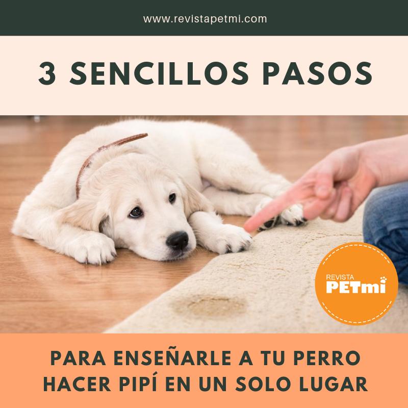 3 Sencillos Pasos Para Enseñarle A Tu Perro Hacer Pipí En Un Solo Lugar Revista Petmi