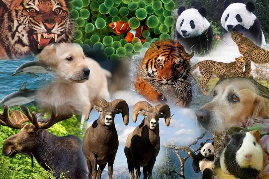 Dia Mundial de los Animales 4 de octubre