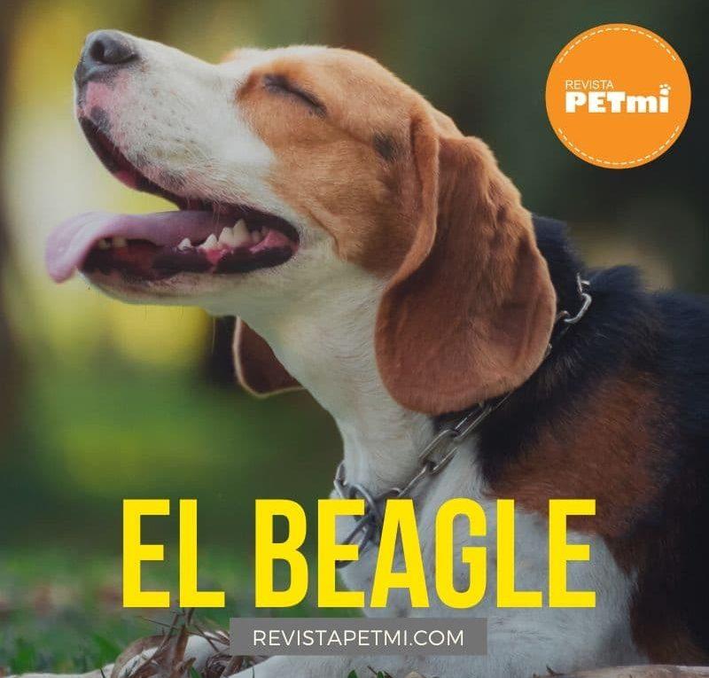 El Beagle (3)-min