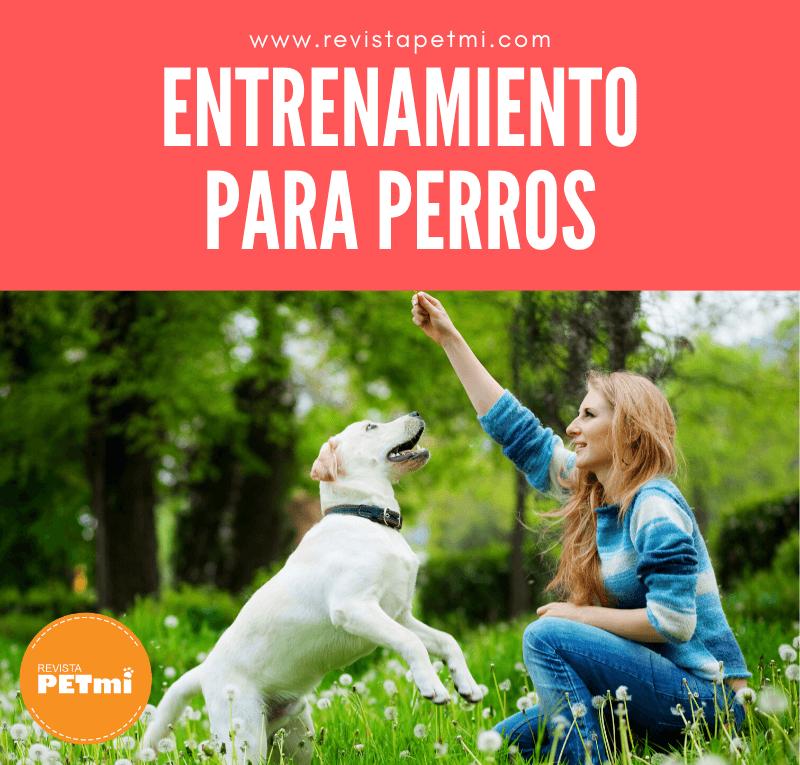 Entrenamiento para perros (1)