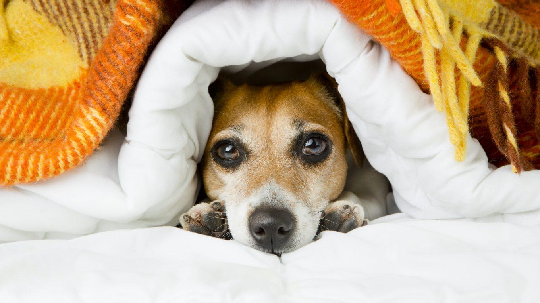 epoca de frio, cuidados para tu mascota
