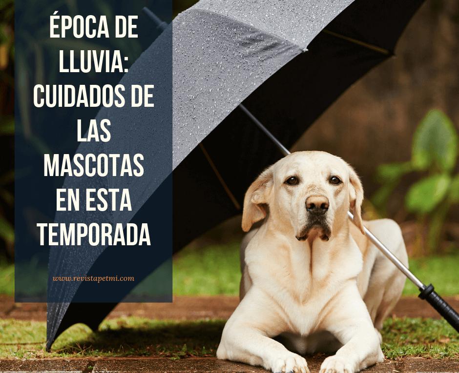 Época-de-lluvia_-cuidados-de-las-mascotas-en-esta-temporada-consejos