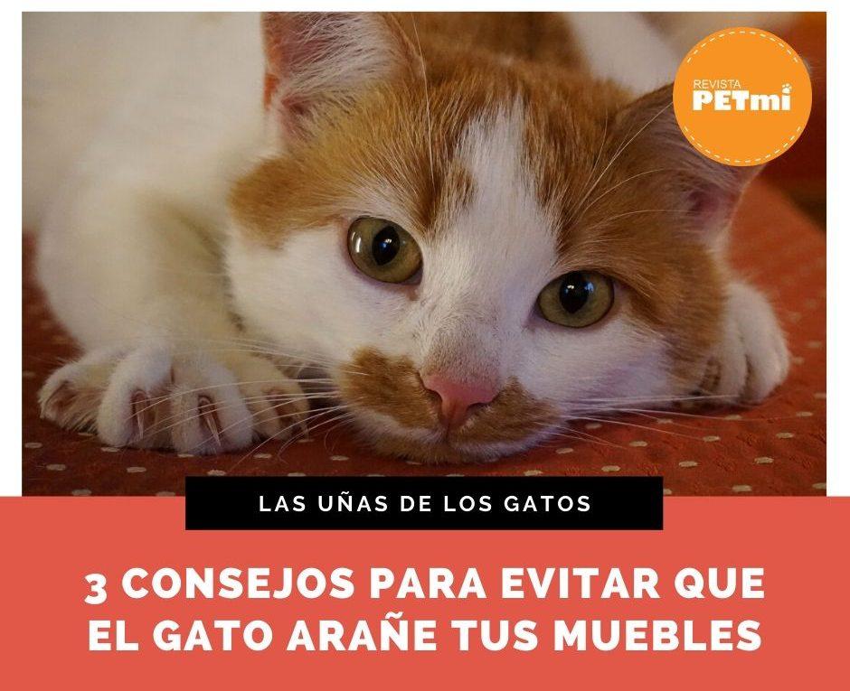 Las uñas de los gatos (1)
