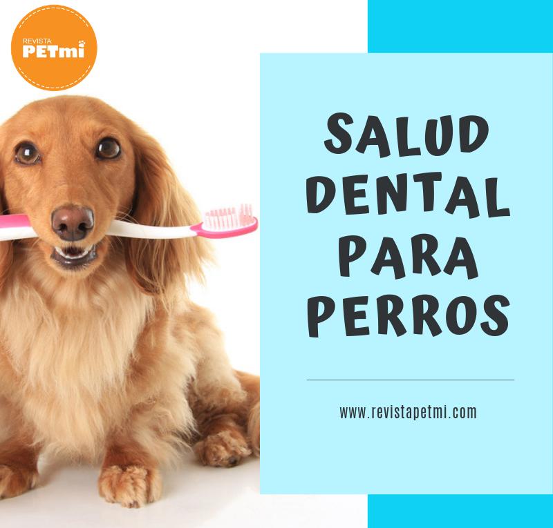 Salud dental para perros.