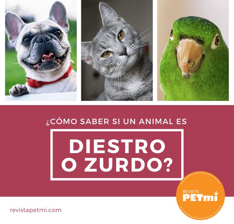 ¿Cómo saber si un animal es diestro o zurdo_ (1)