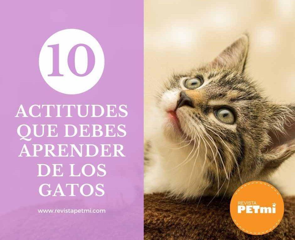 10 actitudes importantes que debes aprender de los gatos-compressed
