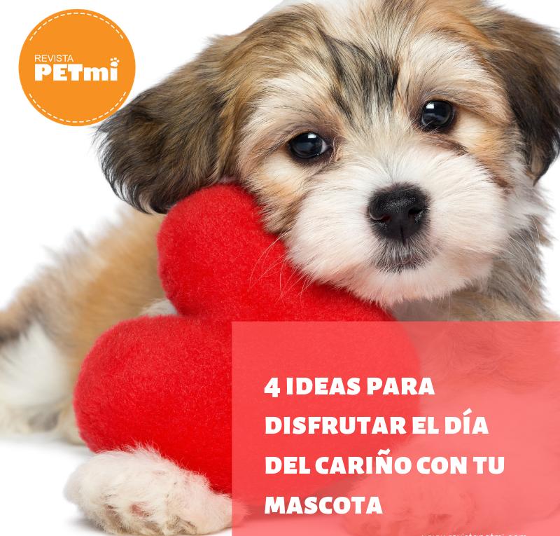 4 ideas para disfrutar el día del cariño con tu mascotas