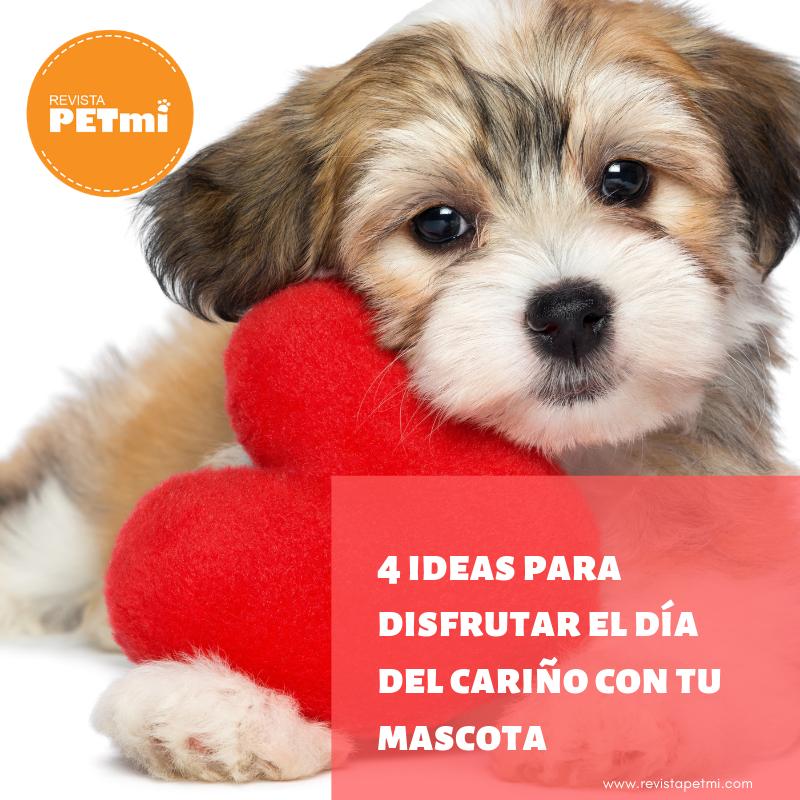 4 Ideas Para Disfrutar El Día Del Cariño Con Tu Mascota