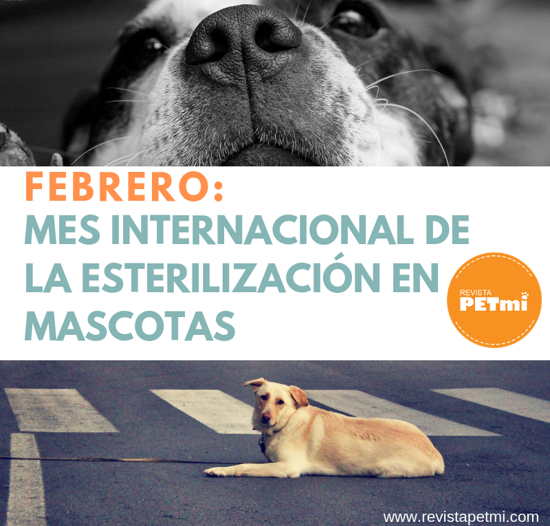 FEBRERO_ Mes Internacional de la Esterilización en Mascotas
