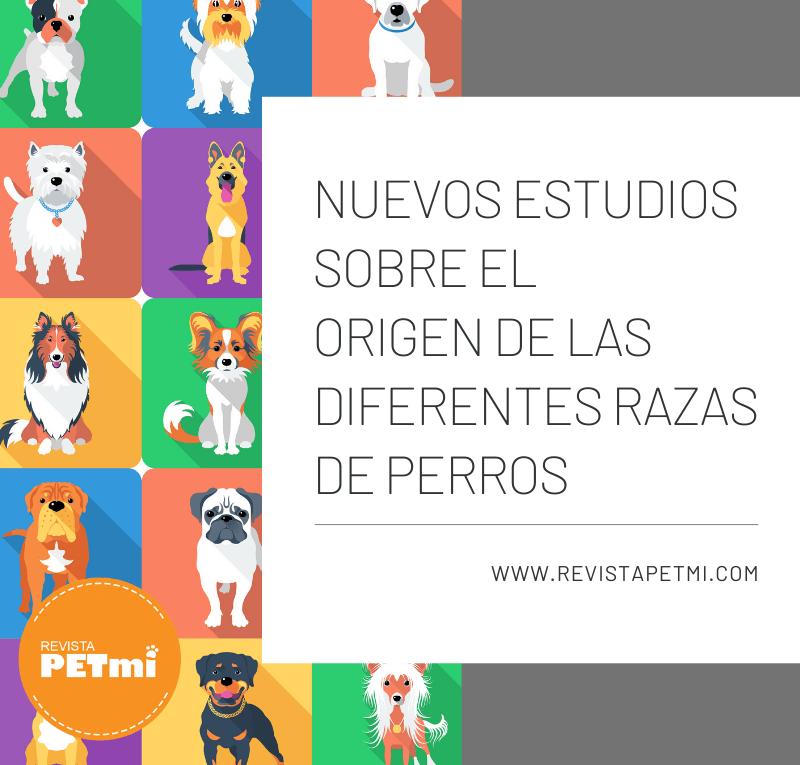 el origen de las diferentes razas de perros (1)