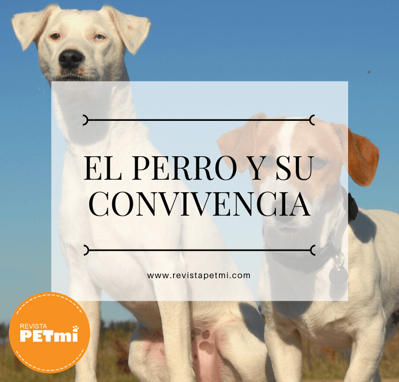 El perro y su convivencia (4) (1)