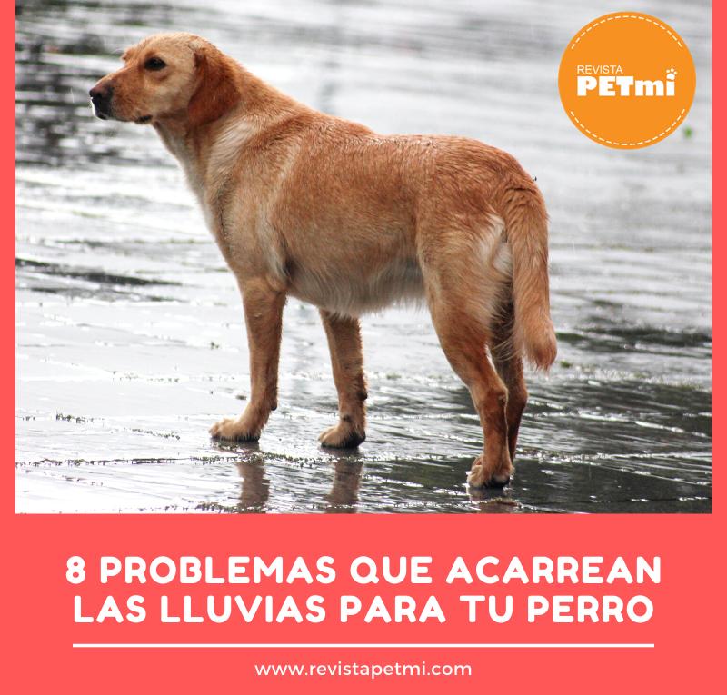 8 Problemas que acarrean las lluvias (2)