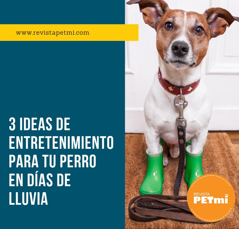 3 ideas de entretenimiento para tu perro en días de lluvia (2)