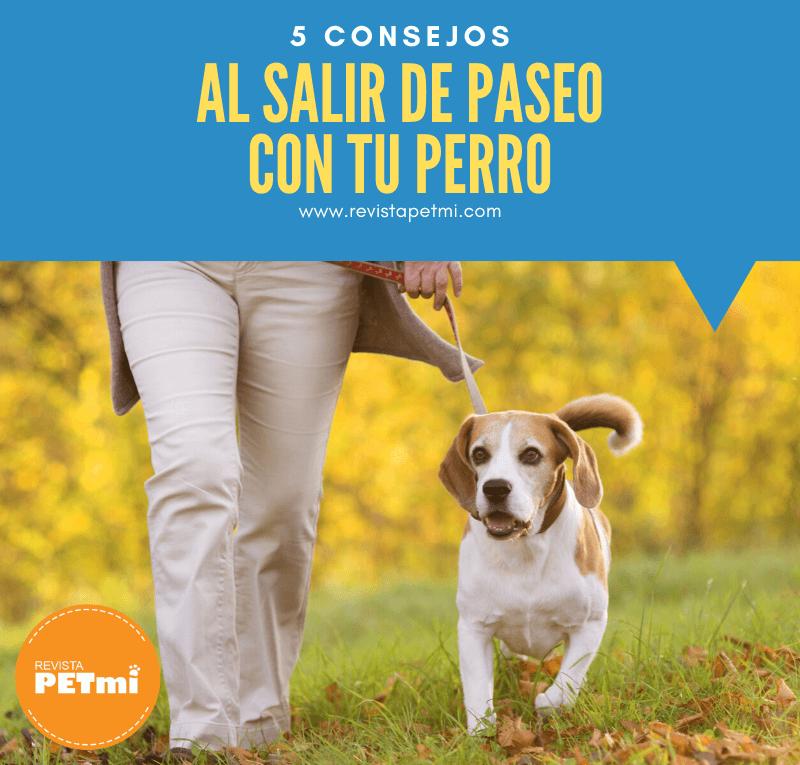 5 consejos al salir de paseo con tu perro (3) (1)