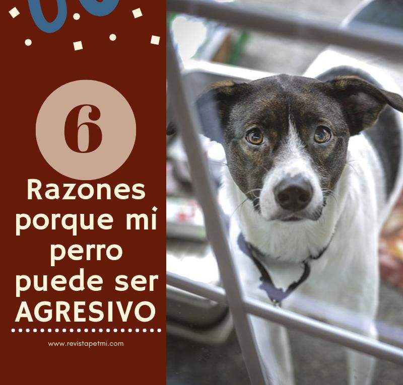 6 razones porque mi perro puede ser agresivo