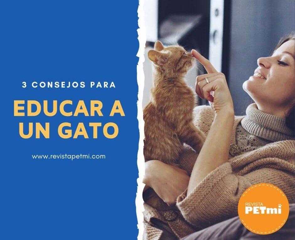3 consejos para educar a un gato (1)