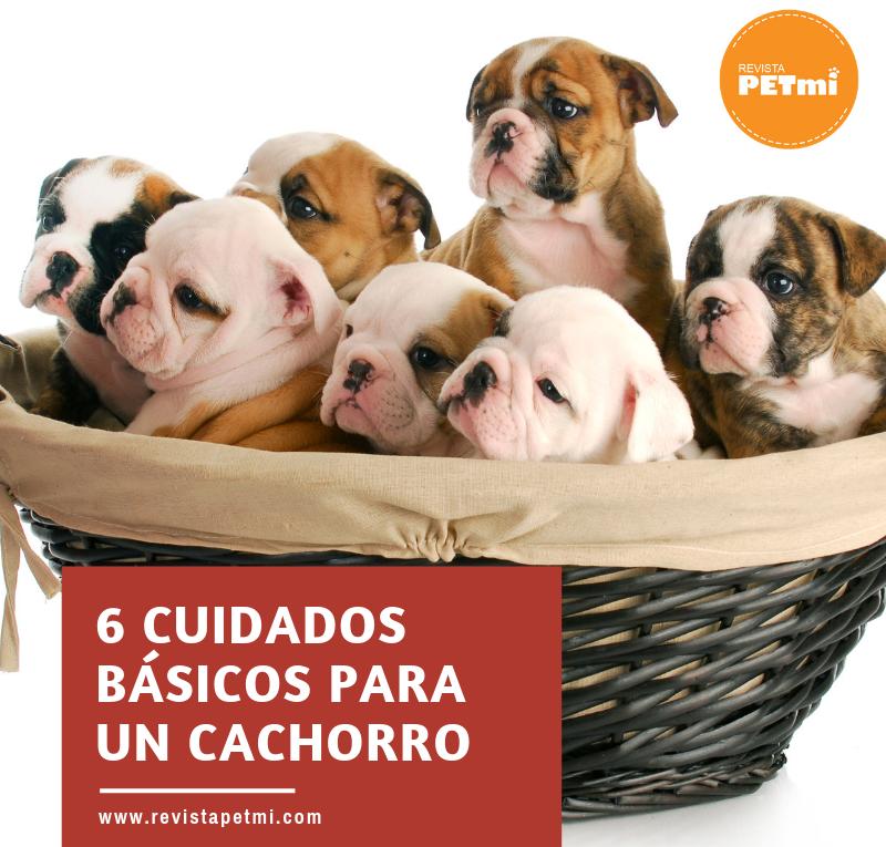 6 cuidados básicos para un cachorro