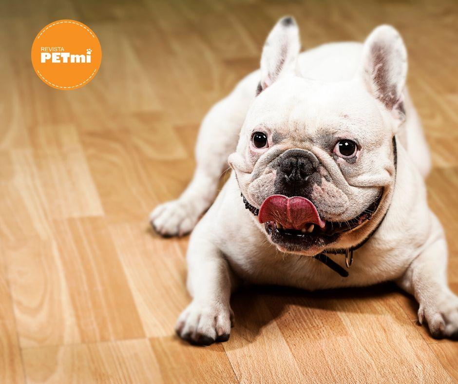 Juegos en casa para mantener a tu perro feliz cuarentena (1)