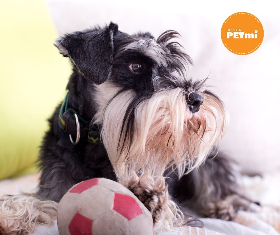 3 ideas de juegos dentro de casa con tu perro en cuarentena