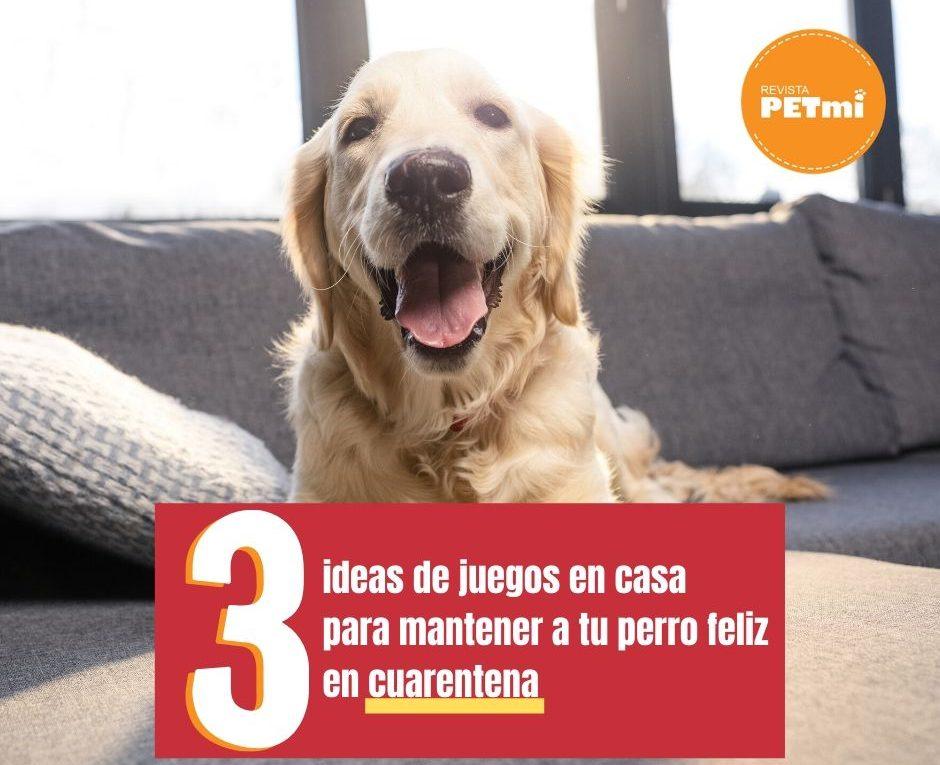 Juegos en casa para mantener a tu perro feliz cuarentena (3)