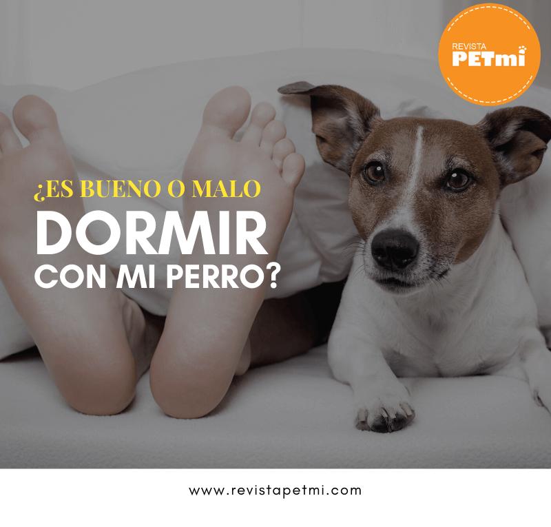 ¿Es bueno o malo dormir con mi perro_ (1)