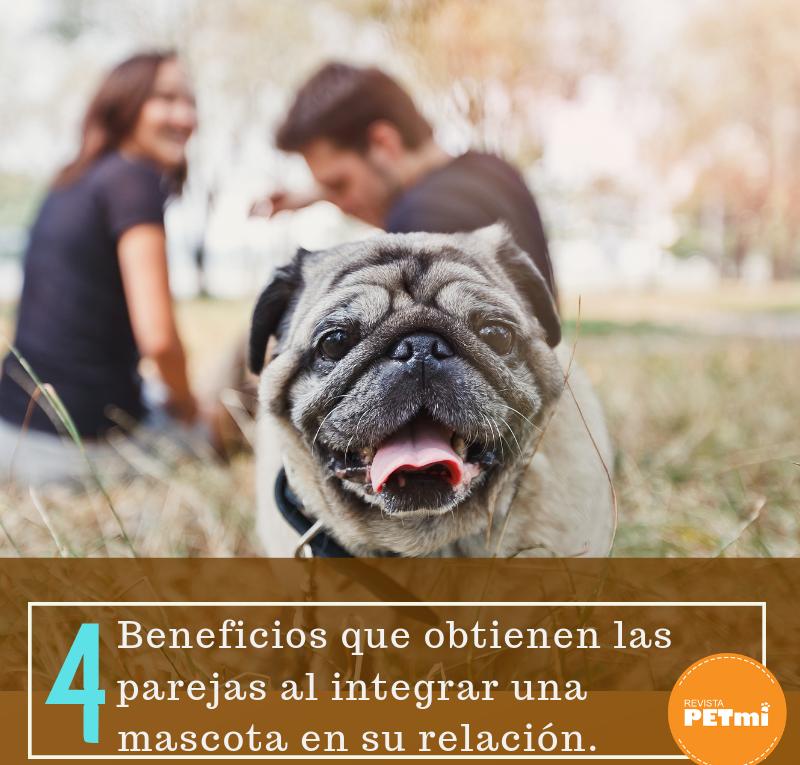 Beneficios de tener una mascota en la relación de pareja (1)