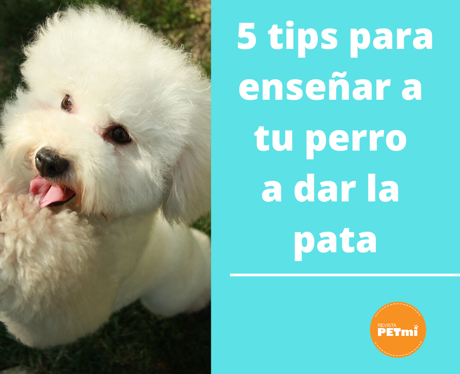 Adiestramiento: 5 tips para enseñar a tu perro a dar la pata