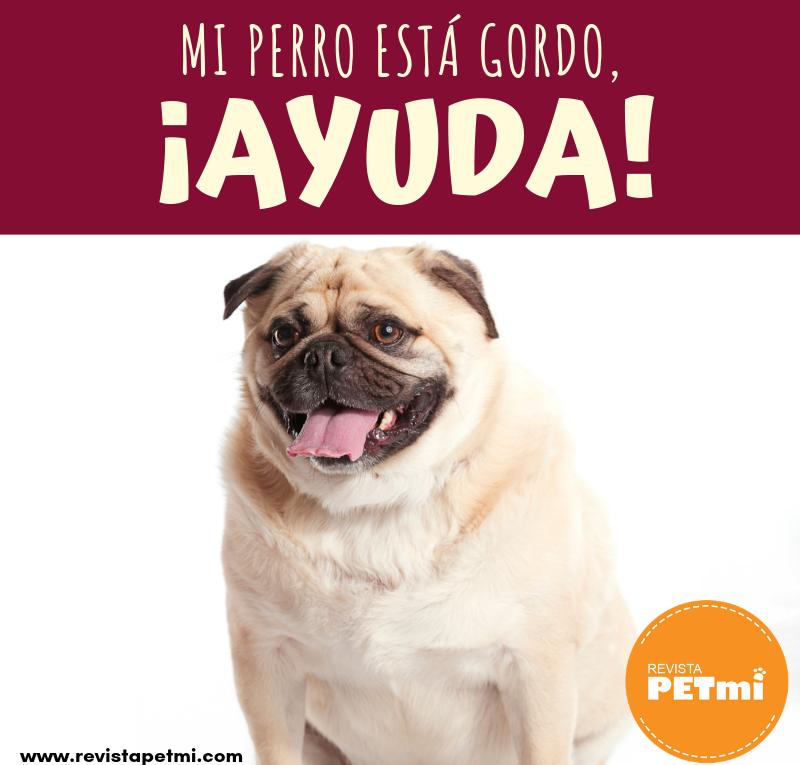 Mi perro esta gordo, ¡Ayuda!