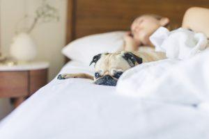 Dormir en cama con mi perro