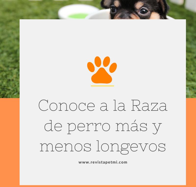 Conoce a la Raza de perro más y menos longevos