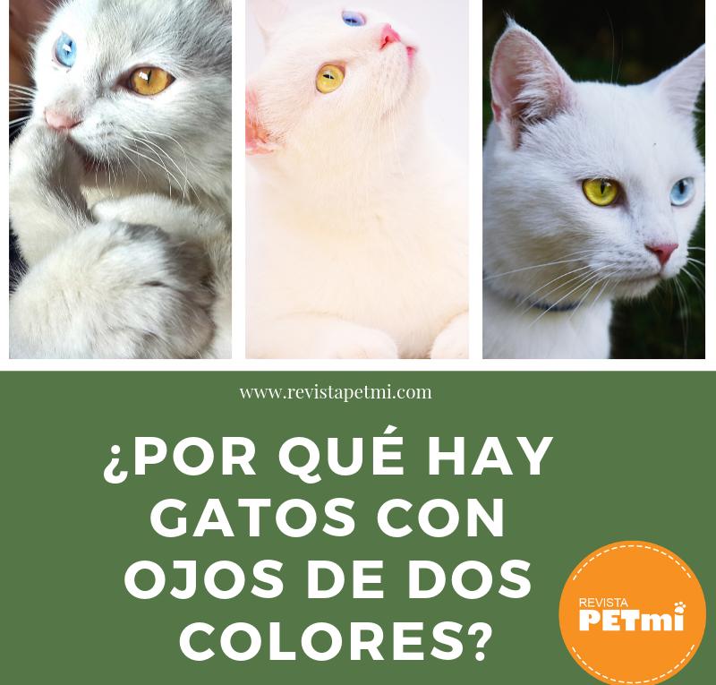 ¿Por qué hay gatos con ojos de dos colores?