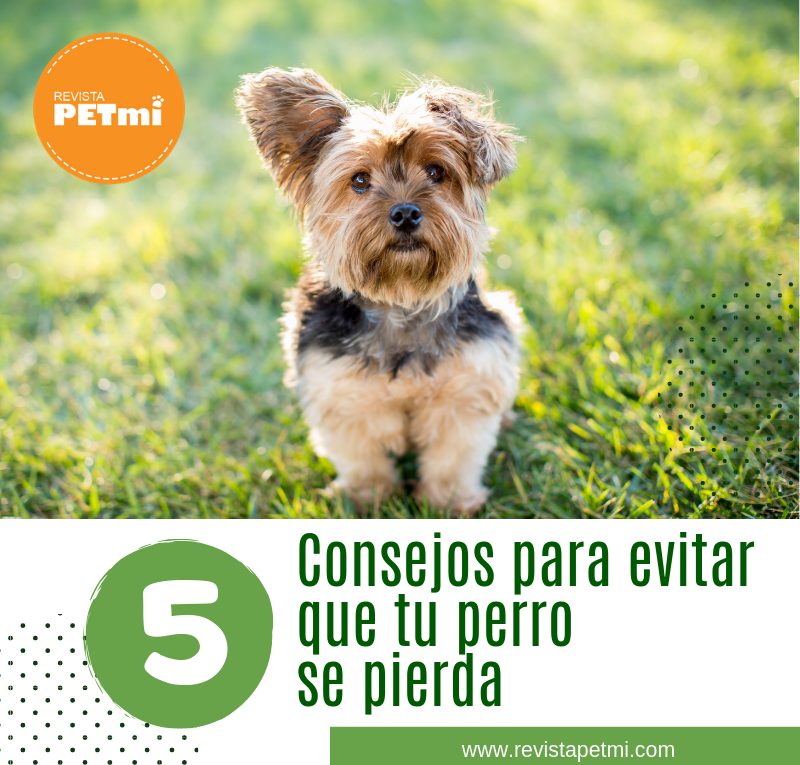 5 Consejos para evitar que tu perro se pierda (1)
