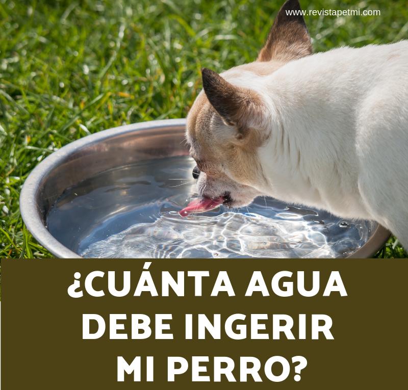 cuanta agua debe de ingerir mi perro