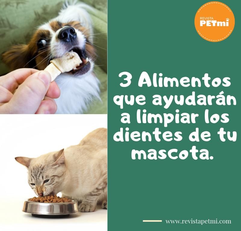 3 Alimentos que ayudarán a limpiar los dientes de tu mascota
