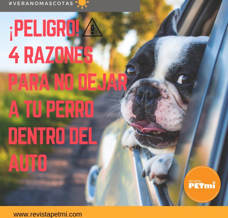 4 razones para no dejar a tu perro dentro del auto