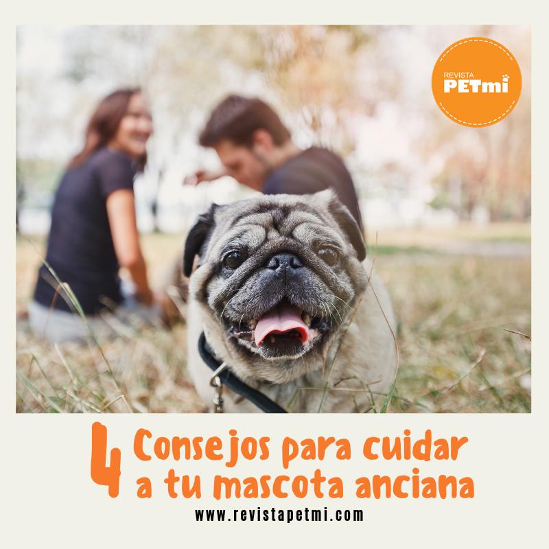 4 Consejos para cuidar a tu mascota anciana. - Revista Petmi
