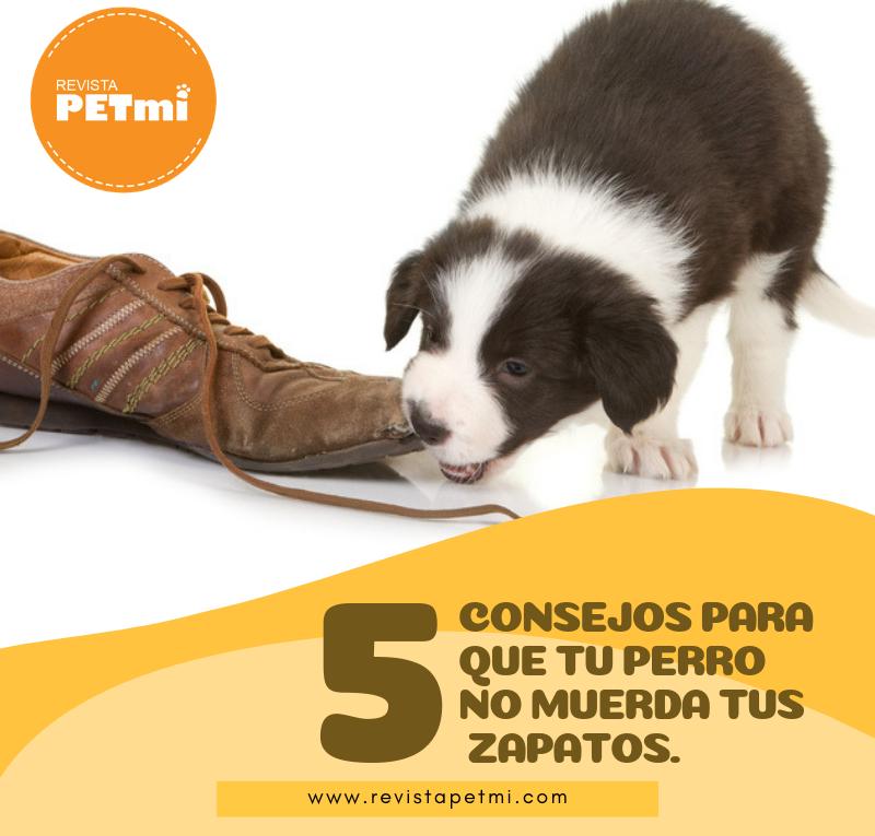 5 consejos para que tu perro no muerda tus zapatos