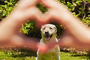 Vinculo emocional entre dueños y mascotas