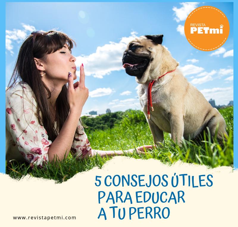 5 Consejos útiles para educar a tu perro
