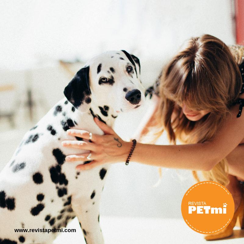 Lo que dice la orina de la salud de tu mascota, revista petmi