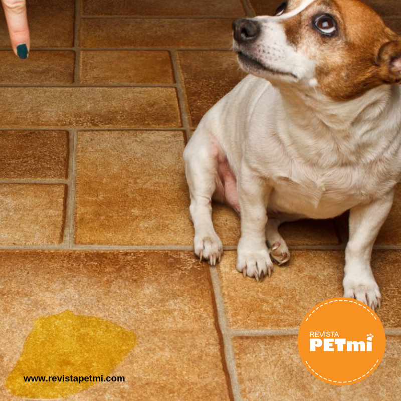 Lo que dice la orina de la salud de tu mascota, tips que te pueden apoyar