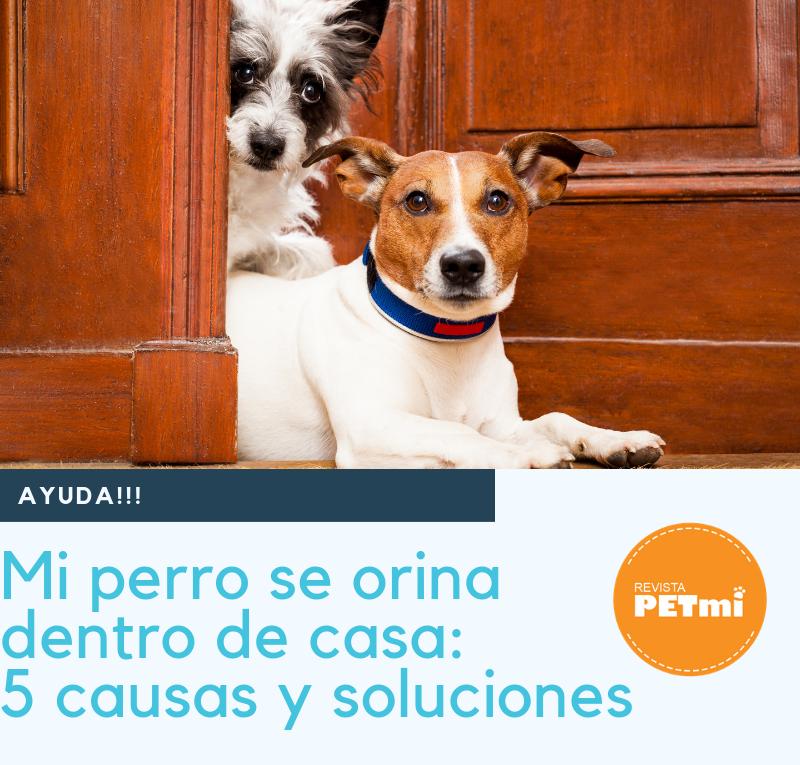 Mi perro se orina dentro de casa: 5 causas y soluciones