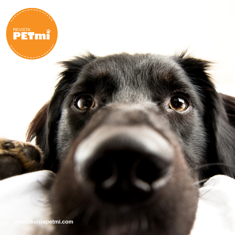 perro anciano, Lo que dice la orina de la salud de tu mascota