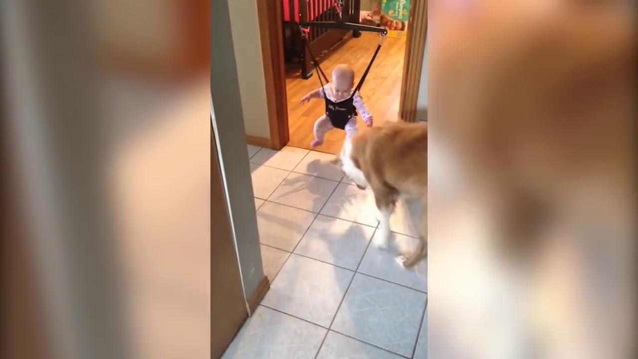 perro le enseña a saltar a un bebé