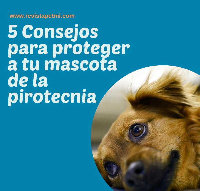 5 Consejos para proteger a tu mascota de la pirotecnia- petmi